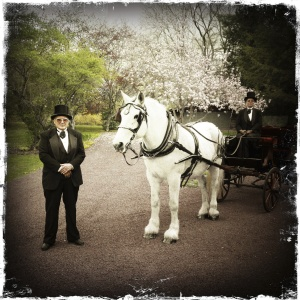 Carriage Horse Ride for Wedding