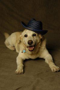 Jeffrey The Dog